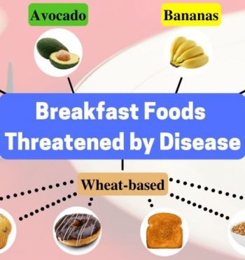 Read How does plant disease affect my breakfast?